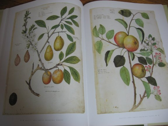 Image for The Clutius Botanical Watercolors. The Flowers and Plants of the Reanaissance.