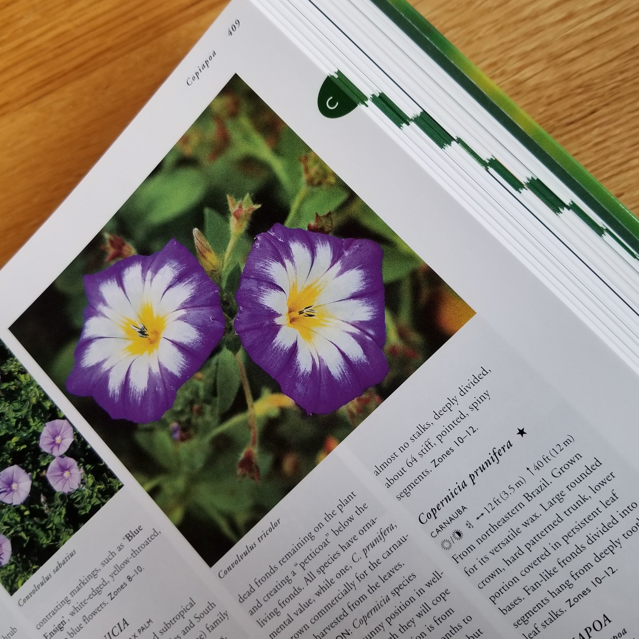Image for Flora: A Gardener's Encyclopedia 2 volume set , vol 1 A-K vol 2 L-Z, with CD-ROM and  Companion volume Flora's Plant Names.